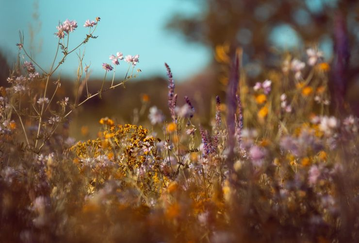 plantes pour la mémoire